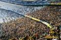 1860 München vs. Dynamo Dresden